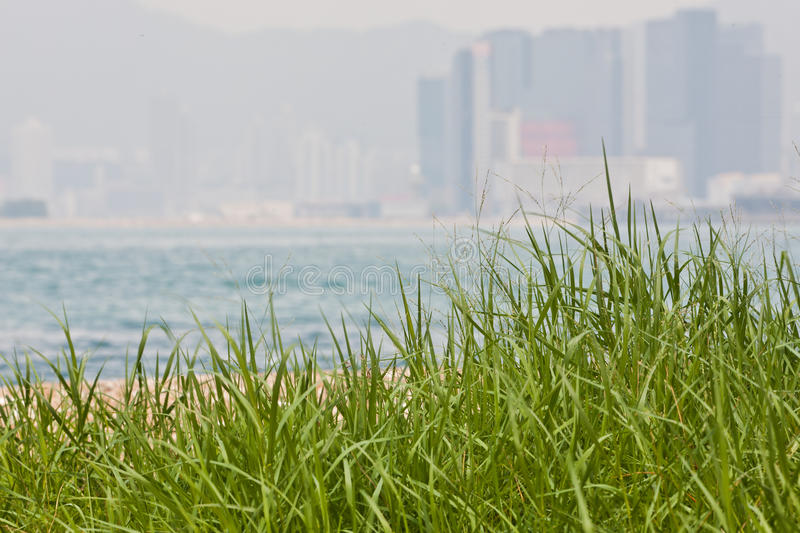 Sea view with grass and building royalty free stock photos