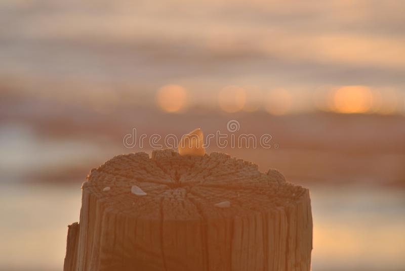 Sea wall stump and shell royalty free stock photo