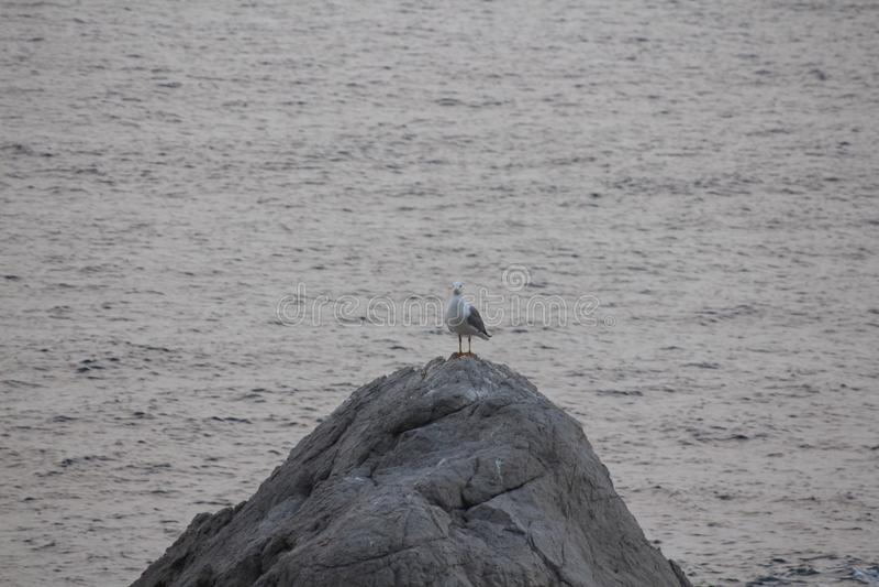 Sea, Water, Bird, Seabird Free Public Domain Cc0 Image