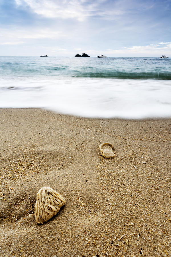 Download Sea With Wave And Shells On Sand Stock Photo - Image of natural, sand: 80672282