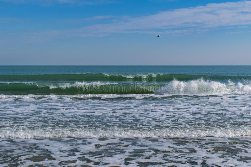 Sea waves and flying bird with blue sky royalty free stock image