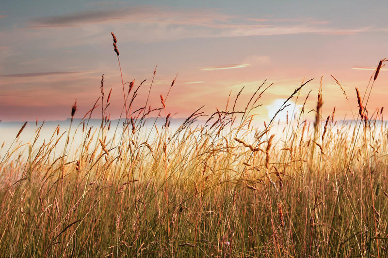 Download Sea Weed At The Lake Shore, With Fog Over The Lake, At Sunrise Stock Photo - Image of reed, quiet: 37807072