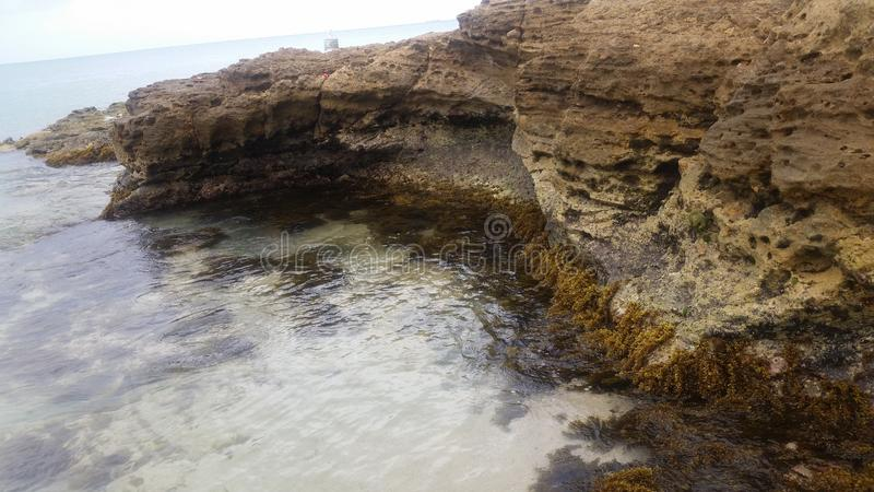 Sea weeds at the rock sides. Water stock photo