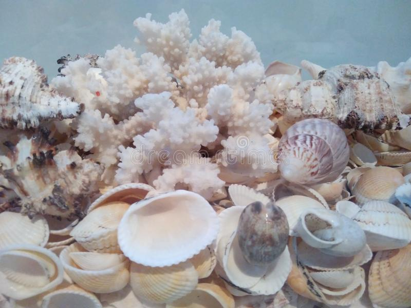 Sea white shells stock photography