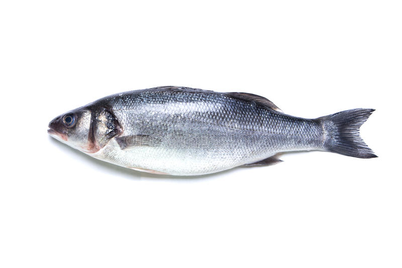 Seabass fish isolated. On white background, turned to the left stock photos