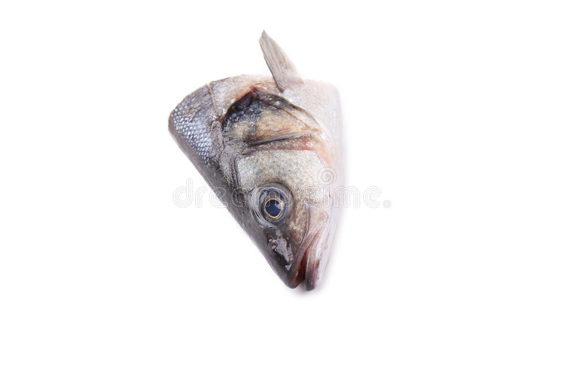 Download Seabass head close up. stock image. Image of image, freshness - 38459243