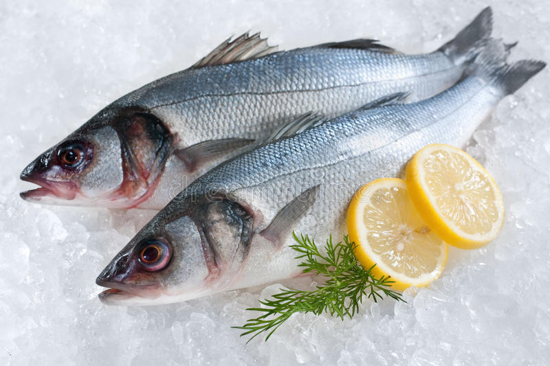 Seabass on ice. Seabass (Dicentrarchus labrax) on ice at the fish market stock images