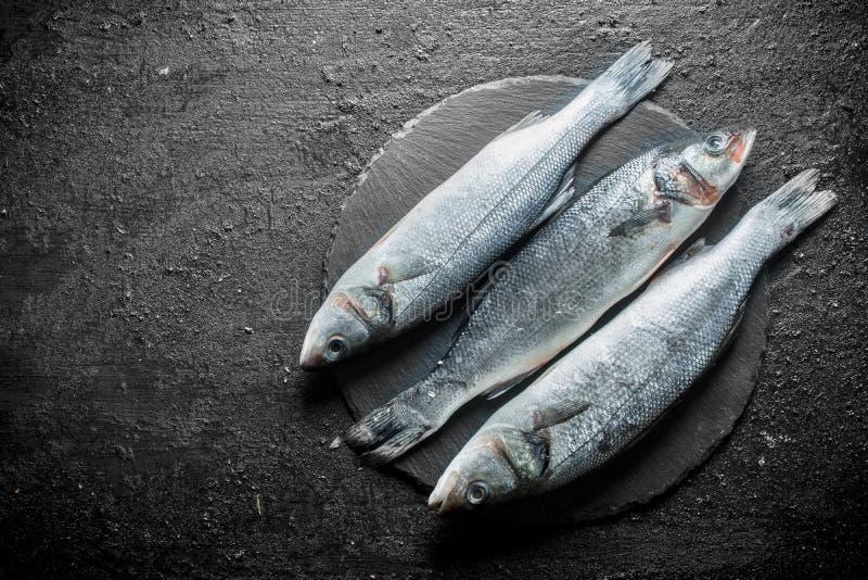 Seabass raw fish royalty free stock photo