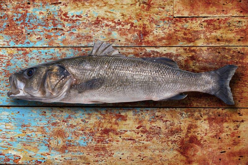 Seabass robalo fish wild big size. Sea bass on wooden board royalty free stock photos
