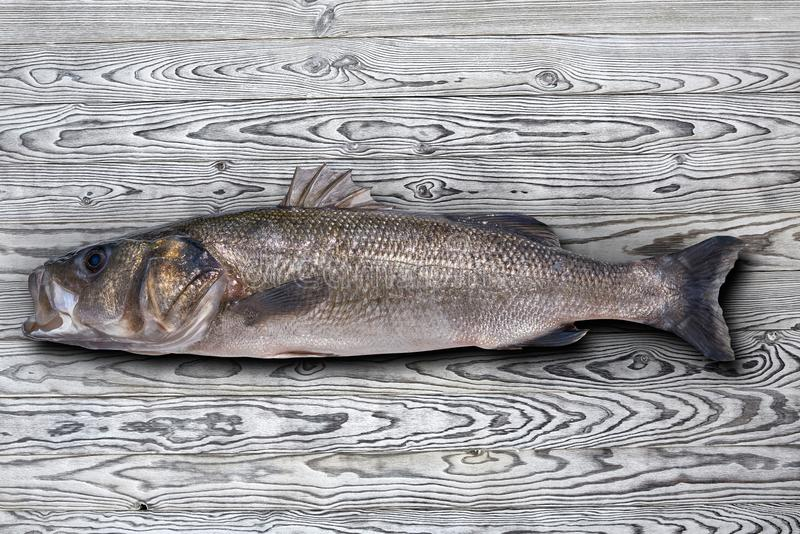 Seabass robalo fish wild big size. Sea bass on wooden board stock photos