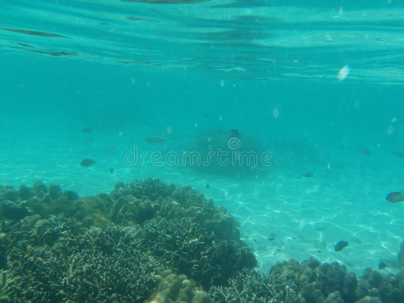 Download Seabed stock photo. Image of coral, asia, seabed, andaman - 14005942
