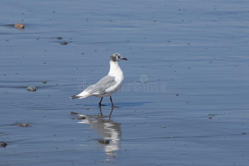 seabird стоковое фото rf