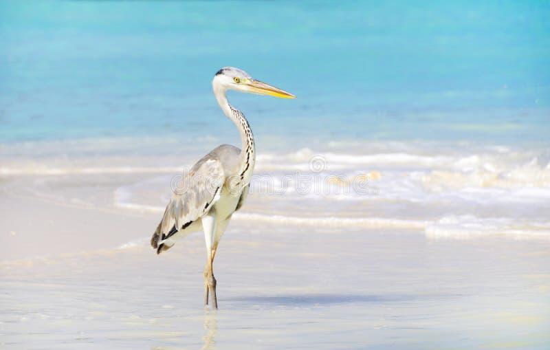 seabird стоковое фото