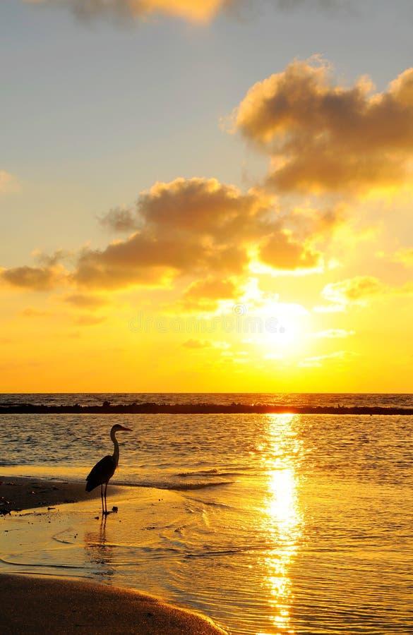 seabird стоковая фотография rf
