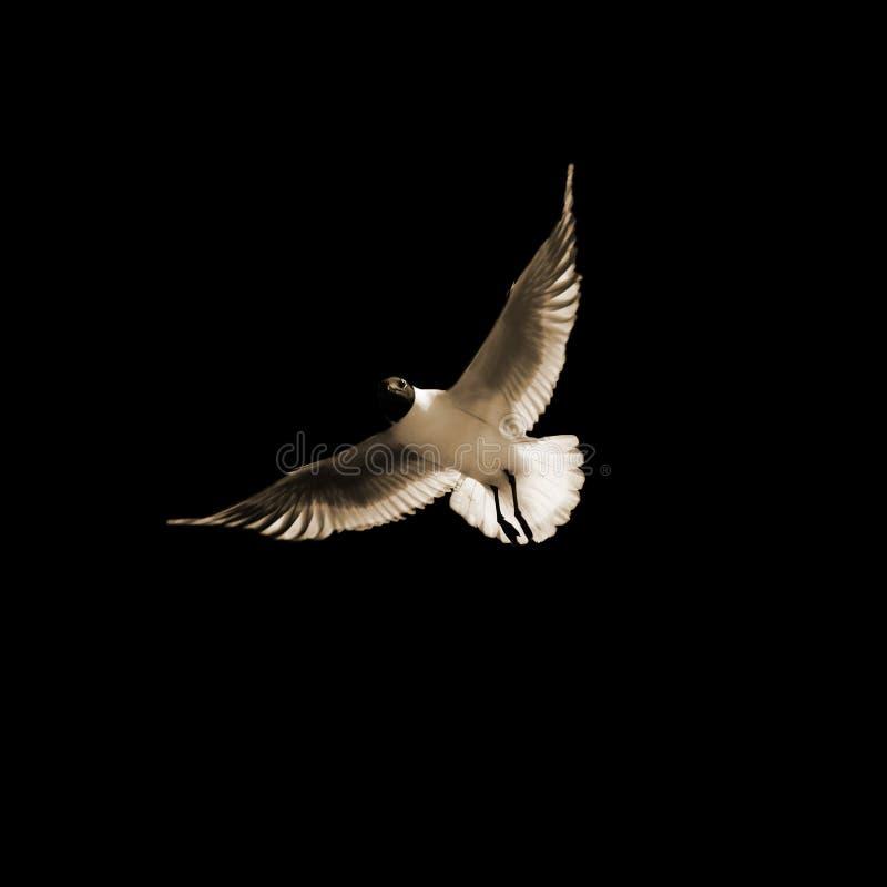 seabird стоковые фото