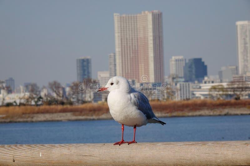 seabird imagen de archivo