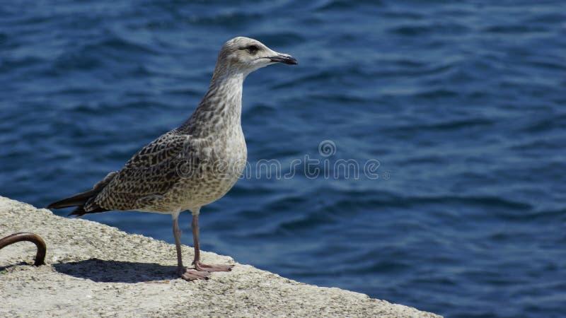 seabird foto de stock royalty free