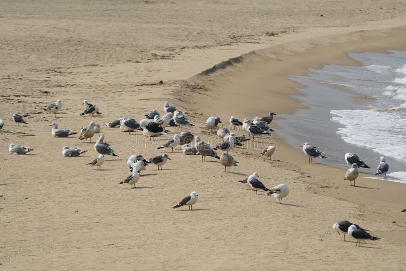 Seabird, Beach, Sand, Shore Free Public Domain Cc0 Image