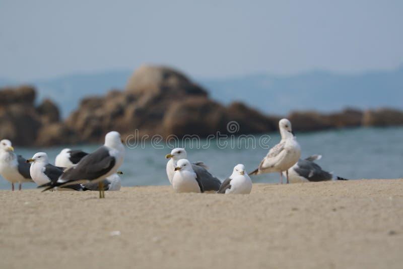 Seabird, Bird, Gull, Fauna Free Public Domain Cc0 Image