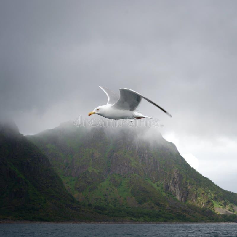 Seabird, Bird, Sea, Sky Free Public Domain Cc0 Image