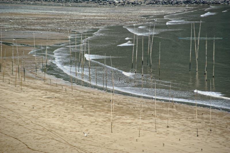 Seabird latanie - Xiapu sceneria fotografia stock