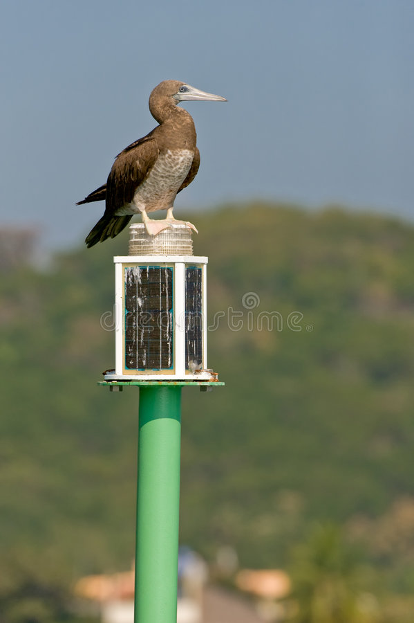 Download Seabird on maritime buoy stock photo. Image of perching - 7351512
