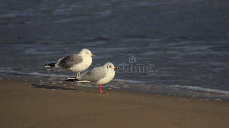 Seabirds Łatwy życie zdjęcie royalty free
