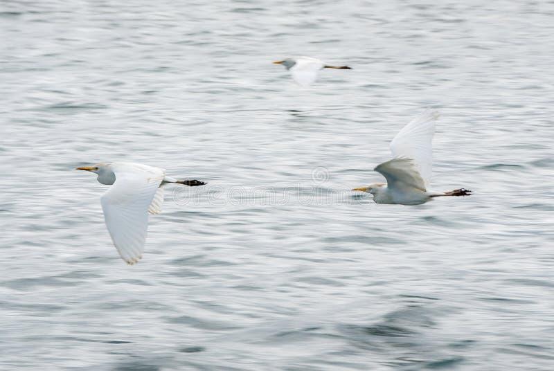 seabirds foto de archivo libre de regalías