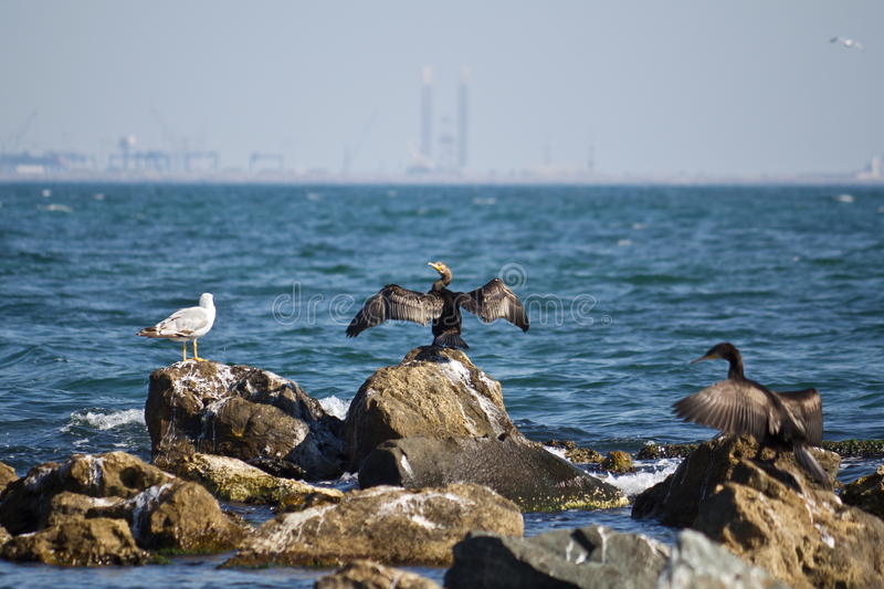 Seabirds Stock Images