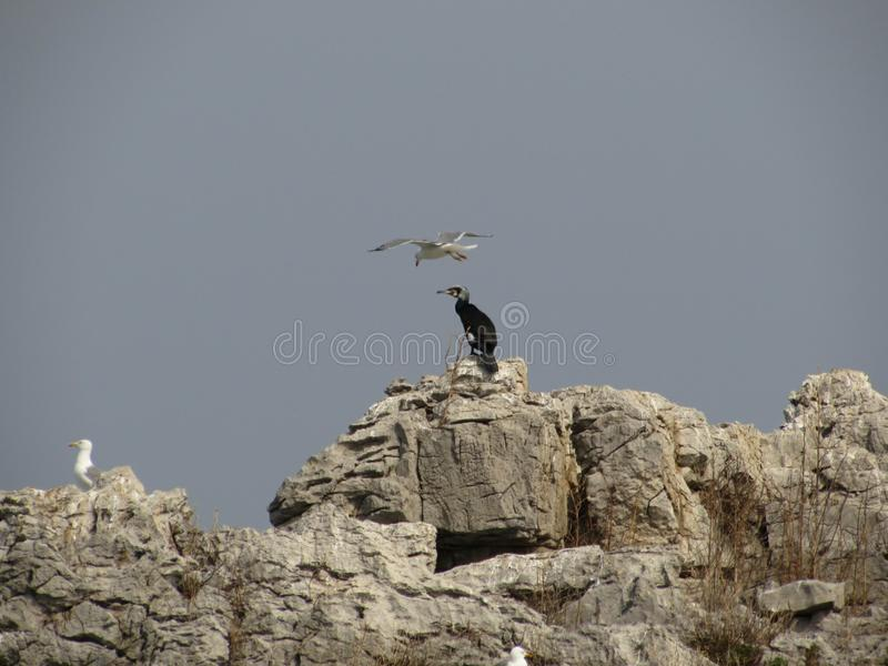 Seabirds royaltyfria bilder