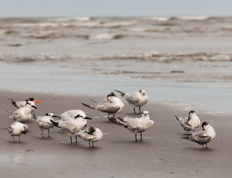 seabirds imágenes de archivo libres de regalías