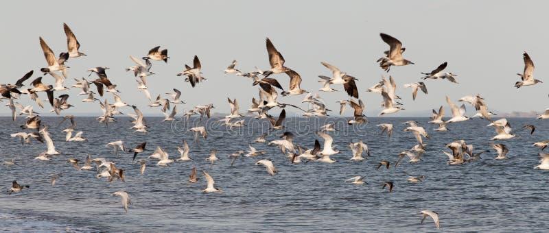 seabirds fotografía de archivo libre de regalías