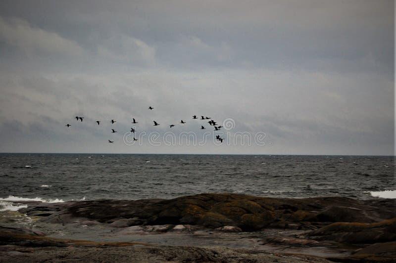 seabirds foto de archivo