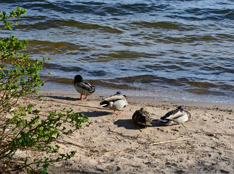 Seabirds on the beach in the summer stock photography