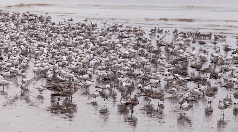 Seabirds stock photos