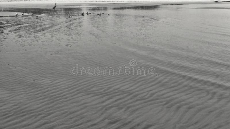 Seabirds And A Crane. Playing in water at the beach royalty free stock photo