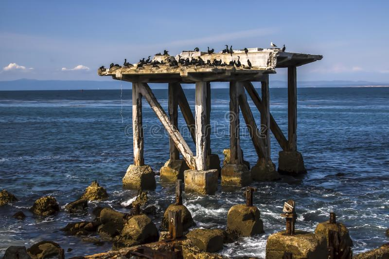 Seabirds on Crumbling Pier in Monterey California Seascape. Seabirds colonize old crumbling pier from abandoned cannery in Monterey California coastal seascape stock images