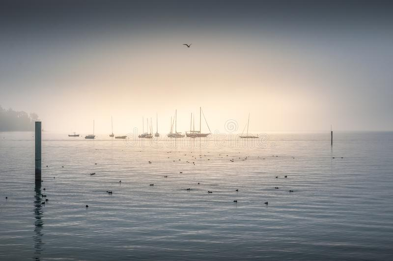 Seabirds floating on the ocean with shipping fleet stock photography