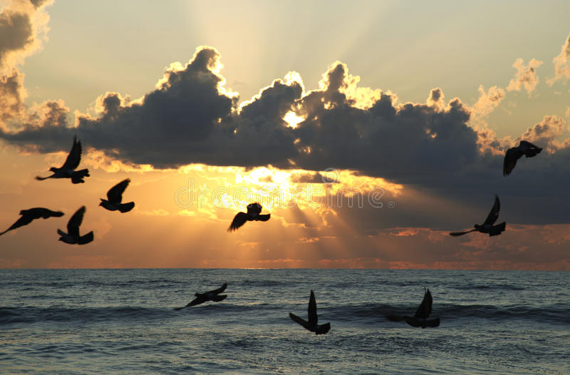 Seabirds flying at sunset. Silhouetted seabirds flying over sea with sunset and cloudscape background stock image