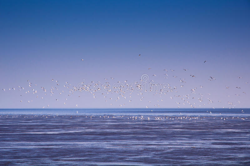 Seabirds in flying. There are so many seabirds are flying on the sea which with blue sky background stock photo