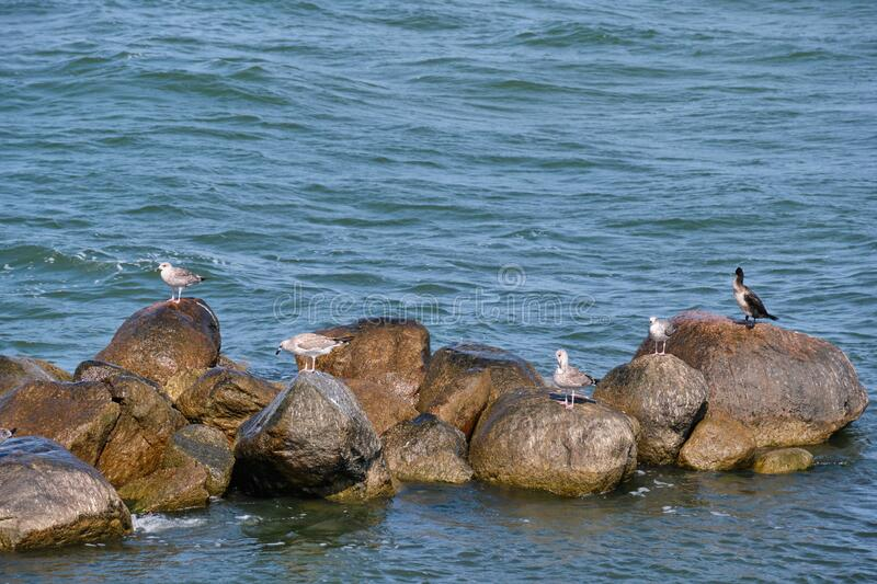 Seabirds resting on wet rock in sea stock images