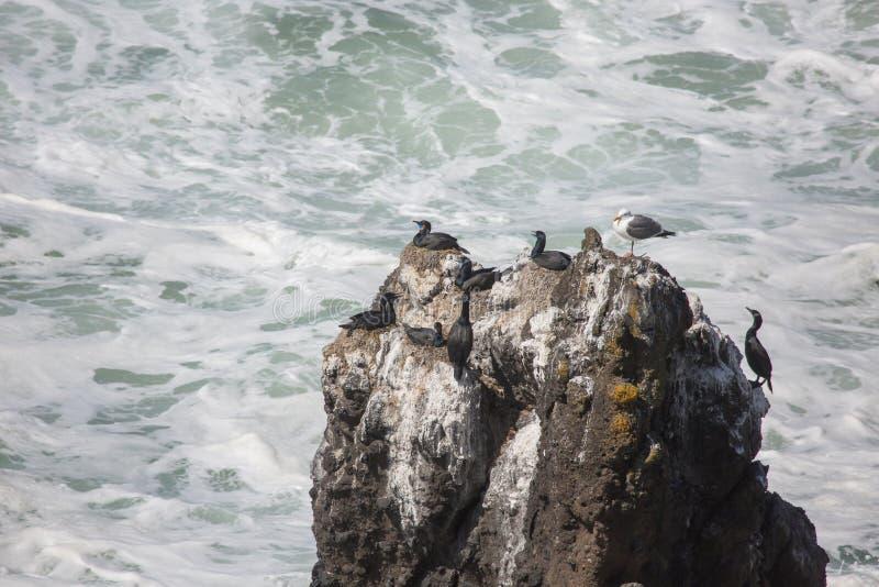 Seabirds on rock. Seabirds rest on a rocky cliff near the Yaquina Head Lighthouse royalty free stock photography
