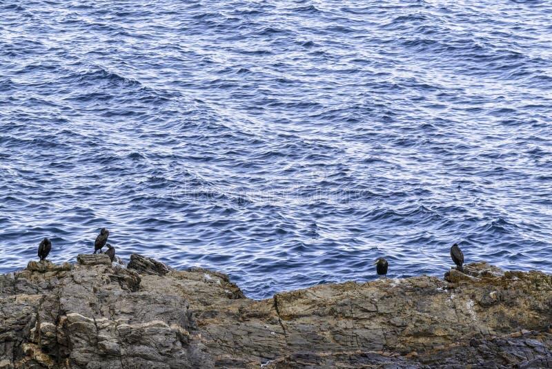 Seabirds on the rocks. Seabirds resting on the rocks off the coast stock photos