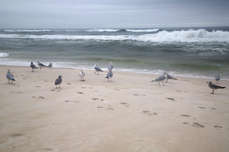 Seabirds on sandy beach. A seabirds on sandy beach background royalty free stock photo