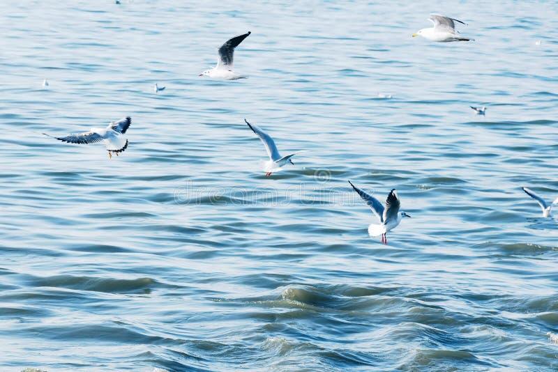 Seabirds seagulls latają ampuła kierdla depresję nad fala woda w morzu Tonujący w stylu instagram światła rocznika modniś zdjęcia stock