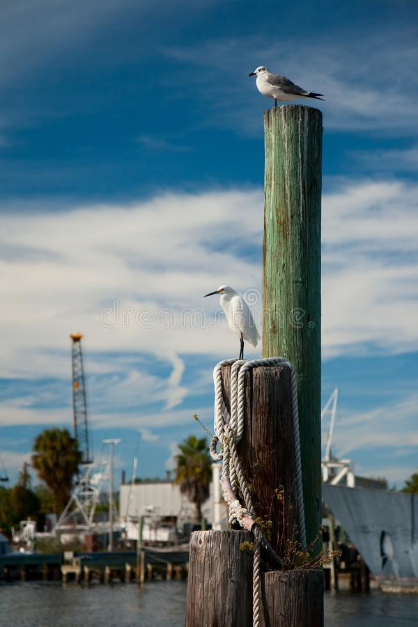 Seabirds at Tarpon Sponge Docks. Seabirds perch atop a boat mooring at the Sponge Docks in Tarpon Springs, Florida stock images