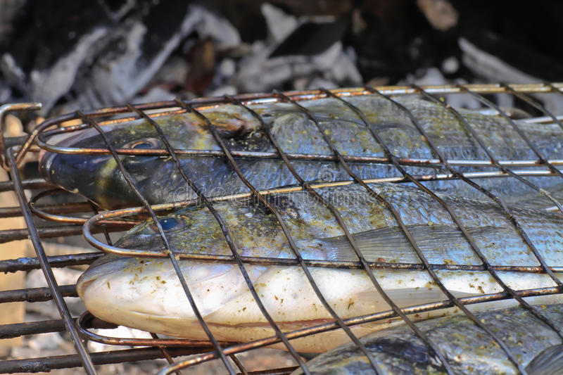 Download Seabream Ready For Barbeque On Charcoal Stock Image - Image: 24022677