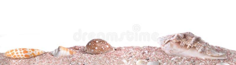 seachells横幅在桃红色沙子的在全景大小 免版税库存照片