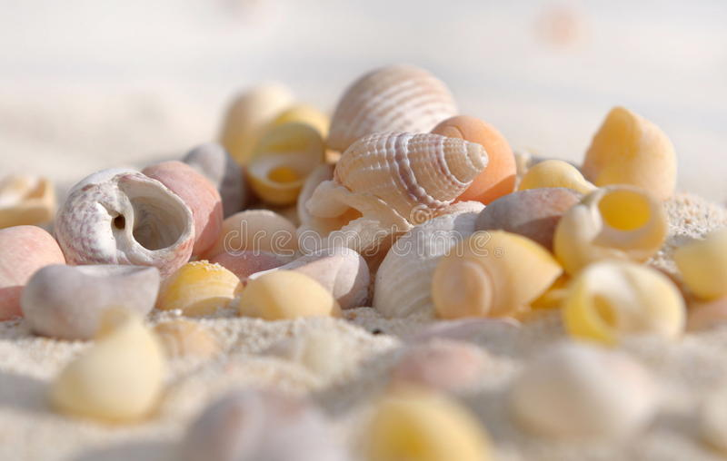 Seachells. Few small shells in the sand on the beach royalty free stock photography