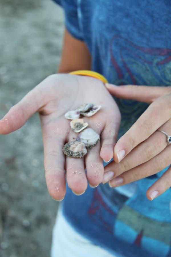 Seachells op de hand royalty-vrije stock fotografie